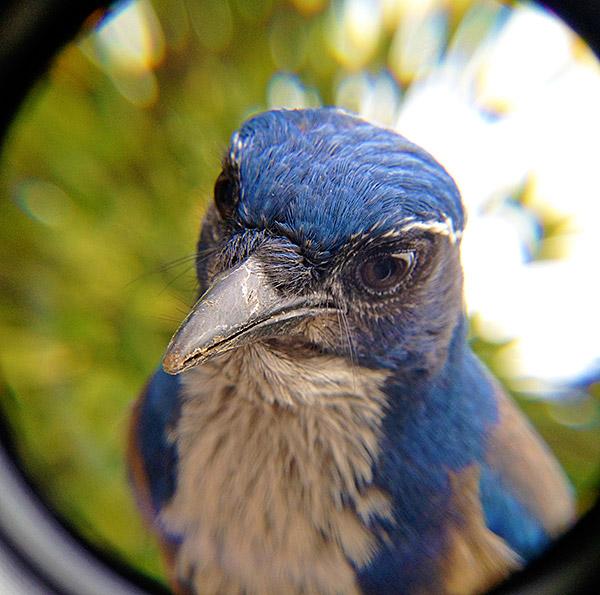 Finalmente potrete fare una foto al vostro uccello