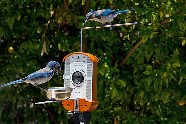 16f0_bird_photo_booth_insert_inuse